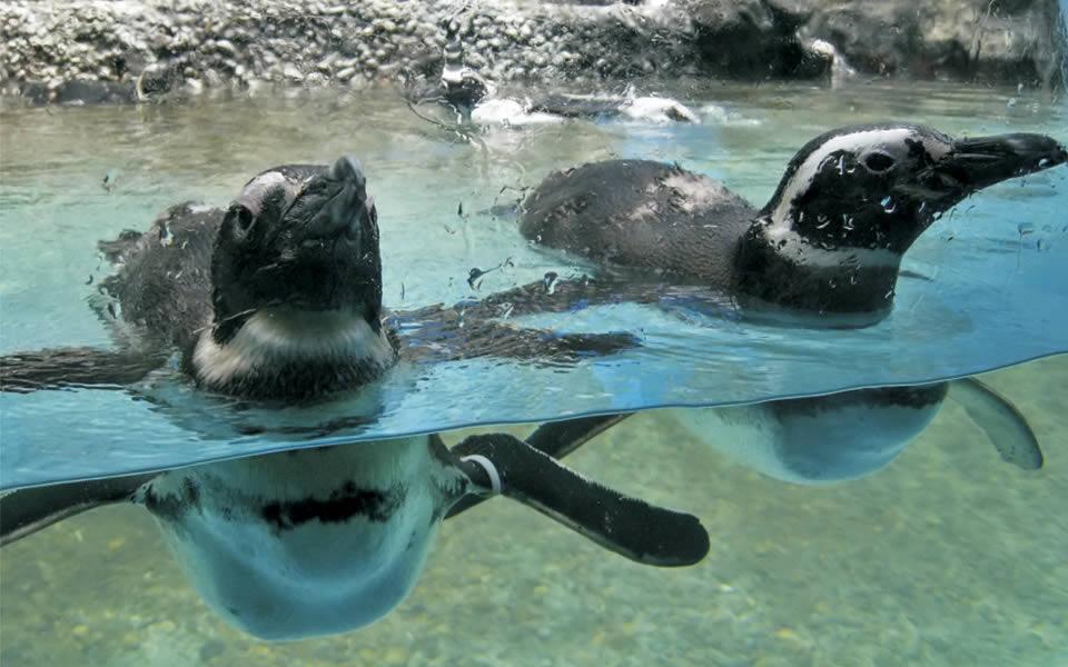 What do we do? | Ocean Aquarium | Big Aquarium