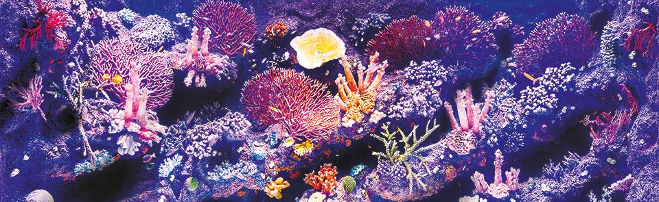 Okyanus Akvaryum 10