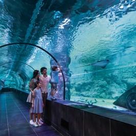 Viasea Aquarium