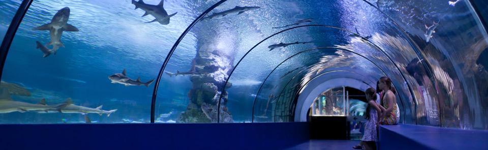 Okyanus Akvaryum Hediyelik