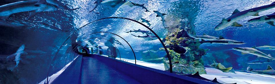 Okyanus Akvaryum Tünel