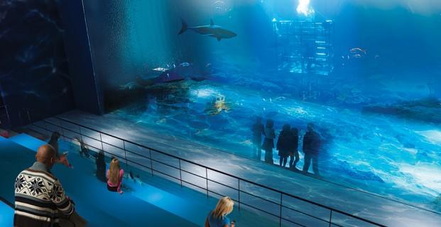 Abu Dhabi Aquarium  Ocean Aquarium  Big Aquarium ...