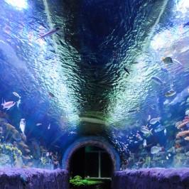 Via Aquarium NY
